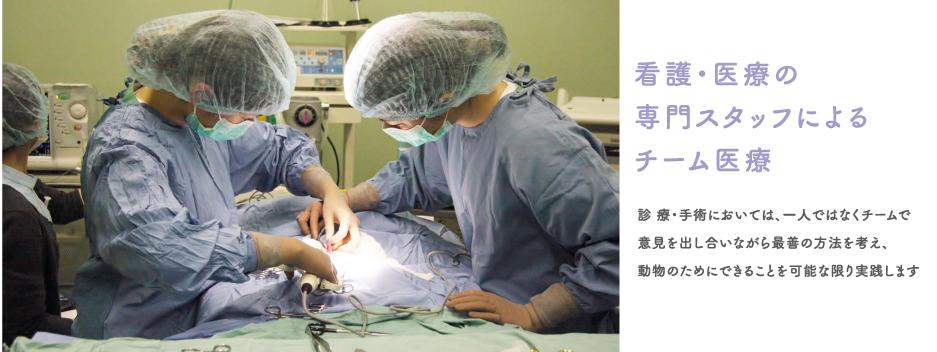「看護・医療の専門スタッフによるチーム医療」