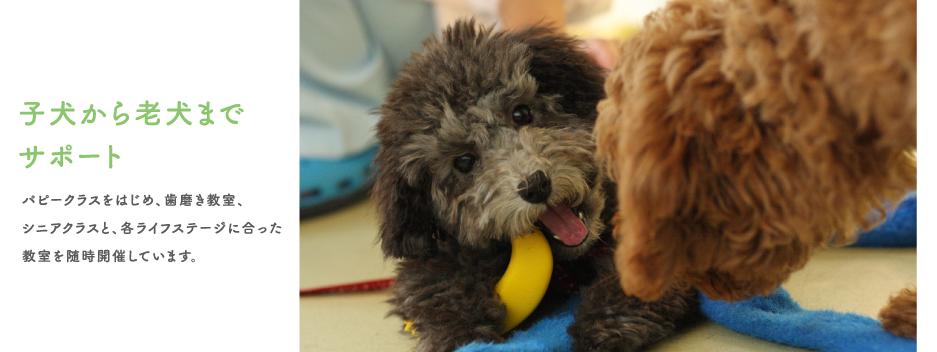 子犬から老犬までサポート
