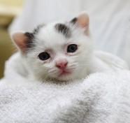 白黒水玉模様の子猫ちゃん
