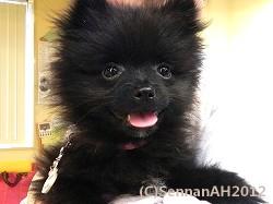 puppy23-1