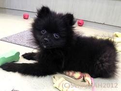 puppy23-2