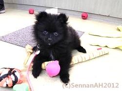 puppy23-3
