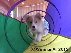 puppy24-6