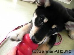 puppy24-3